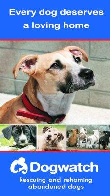 Dogwatch brochure