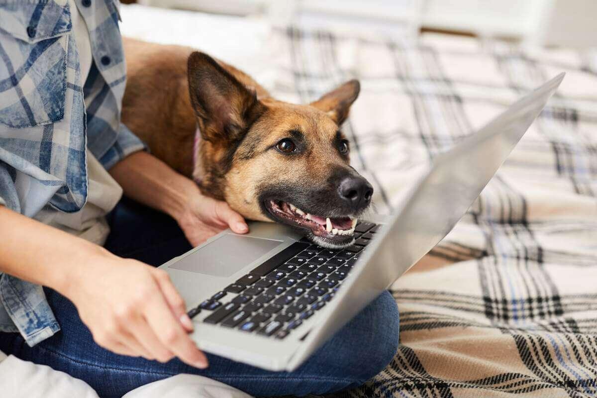 Man with laptop and German Shepherd dog